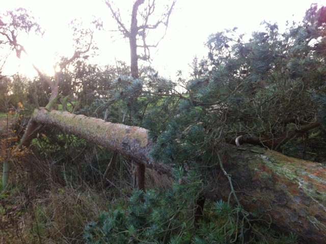Winter Storms and Trees - How to Protect Your Property